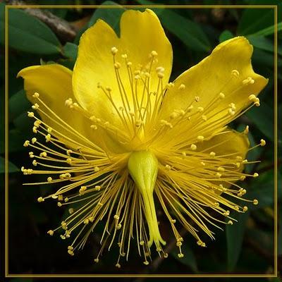 Flores Exóticas para Adornar tu Hogar: los Anturios y las Orquídeas